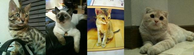 Cats Byron